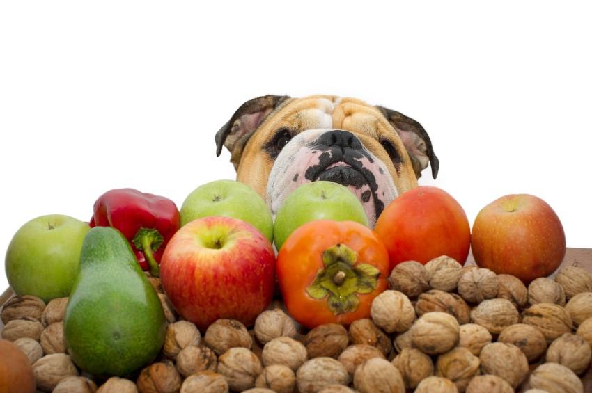 Hund Barf Gemüse