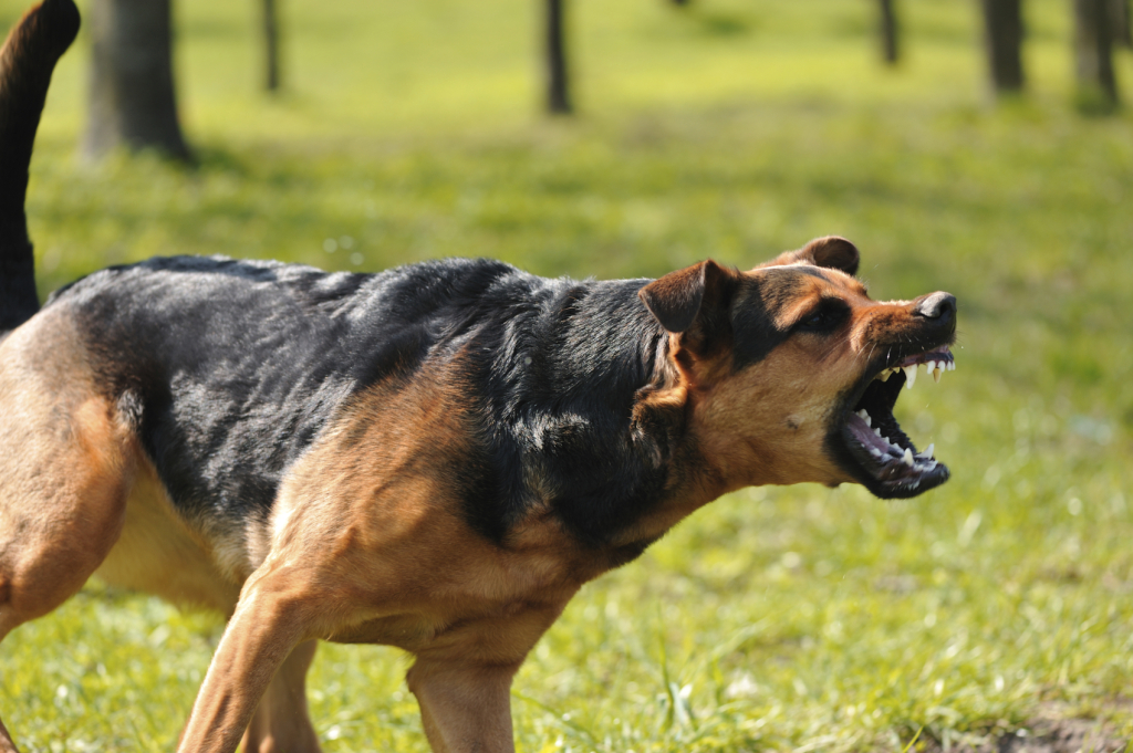 Hund bellend