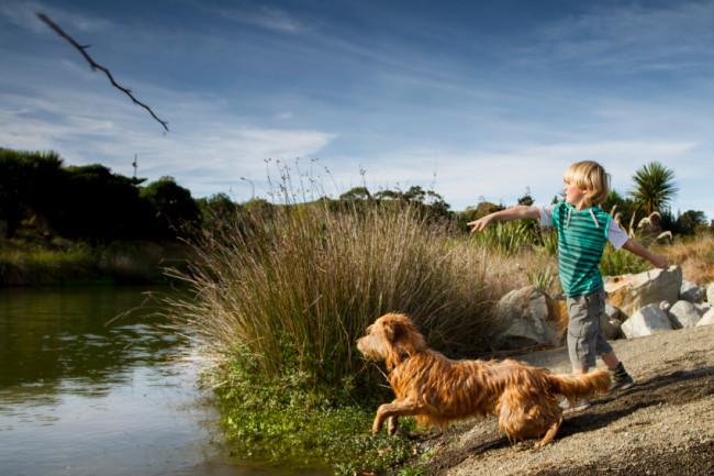 Hund fänt Stock, den Junge in einen See wirft