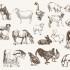 Farmtiere abgebildet