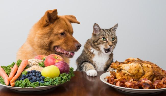 Katze Hund Obst Fleisch