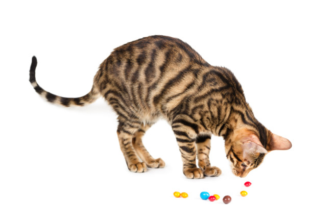 Bonbons und Katze