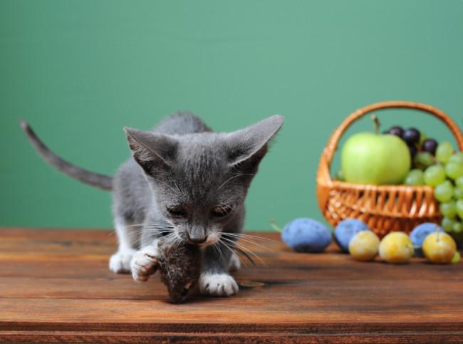 Katze Obstkerne Zyankali