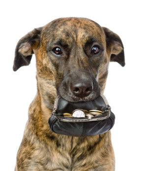 dog holding a purse with coins in its mouth. isolated on white
