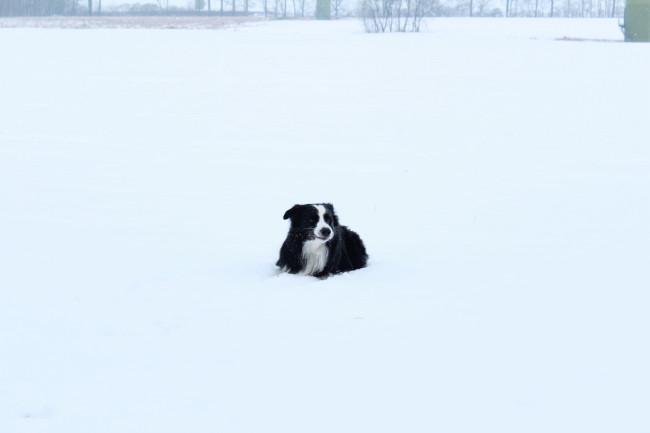 Im Winter Barfen
