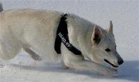 Julius-K9 IDC-Gurtbandgeschirr Gr.0 für Hunde