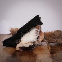 Rinderkopfhaut mit Fell, 800 g für Hunde
