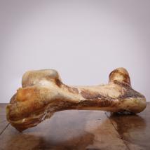 Straußenknochen extra riesig,  1 Stück für Hunde
