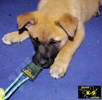 Beißwurst aus Leder 20x5cm innengenäht für Hunde