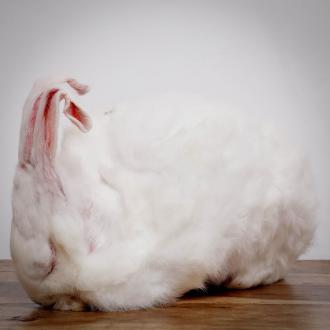 Kleines Kaninchen, ganzes Tier, ca. 200-300g für Hunde
