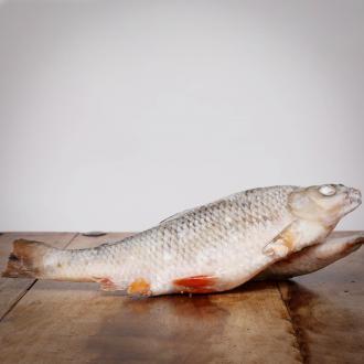 Rotaugen, ganze Fische, 500 g für Greifvögel