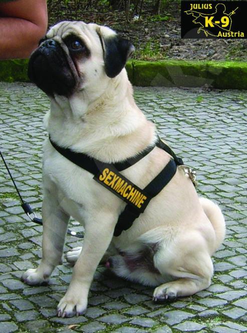 Gurtbandgeschirr Mini für Hunde