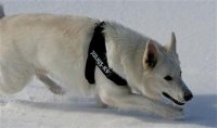 Neu Julius-K9 IDC-Gurtbandgeschirr Gr.1-3 für Hunde 1