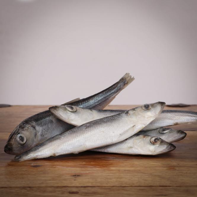 Heringe, ganze Fische 15-18cm, lose für Hunde