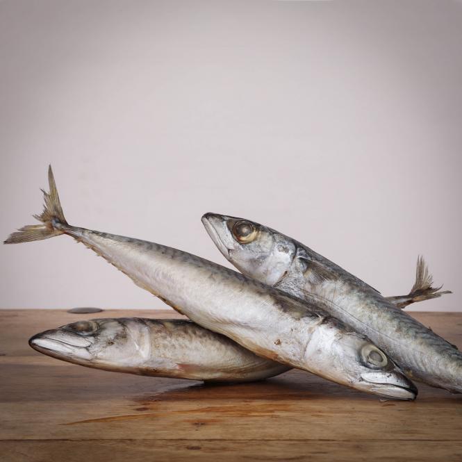 Makrele, ganze Fische , lose, 1000 g für Hunde