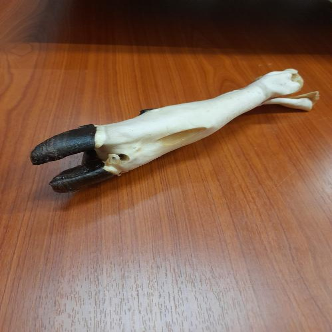 Ziegenbein, 1 Stück für Hunde