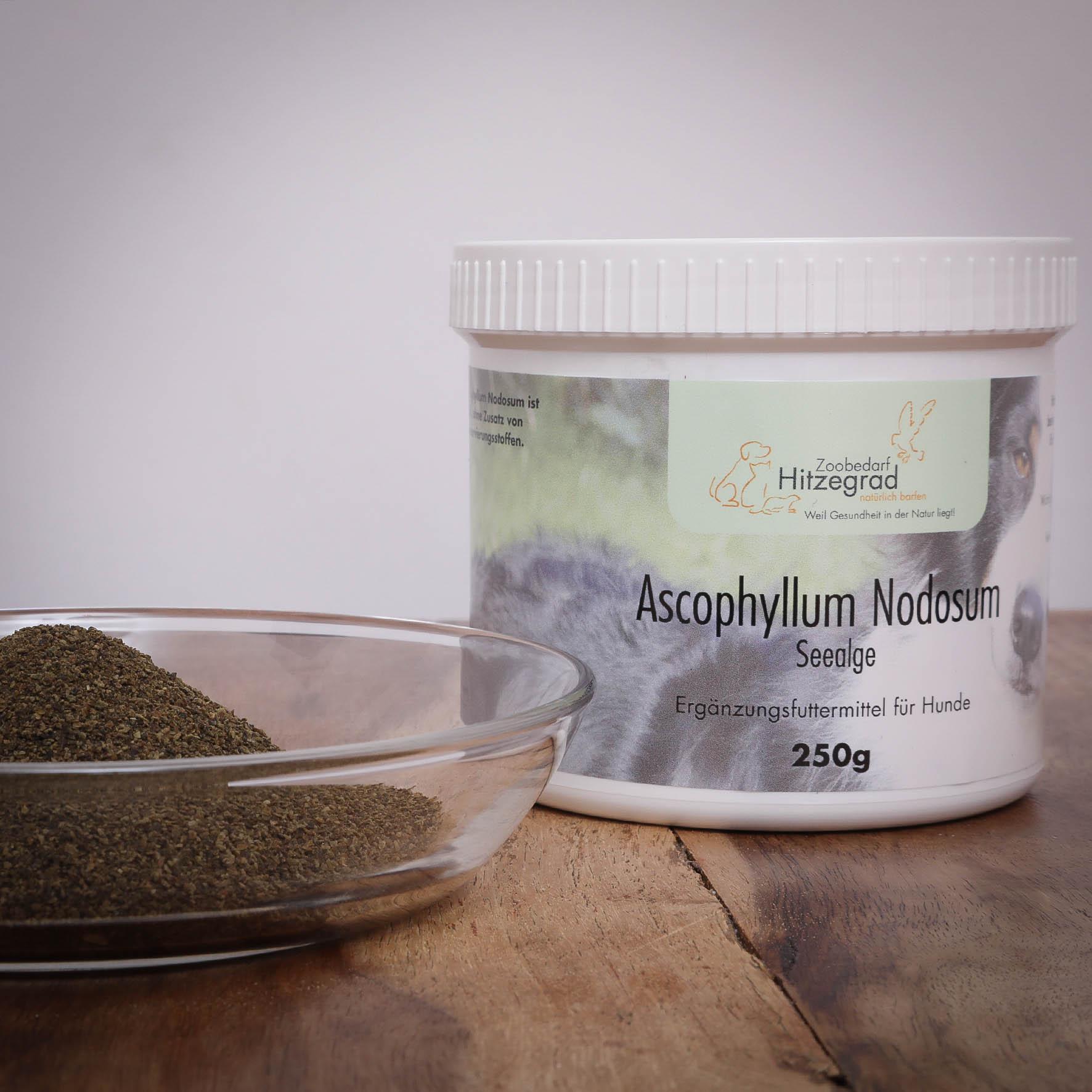 Ascophyllum Nodosum für Hunde