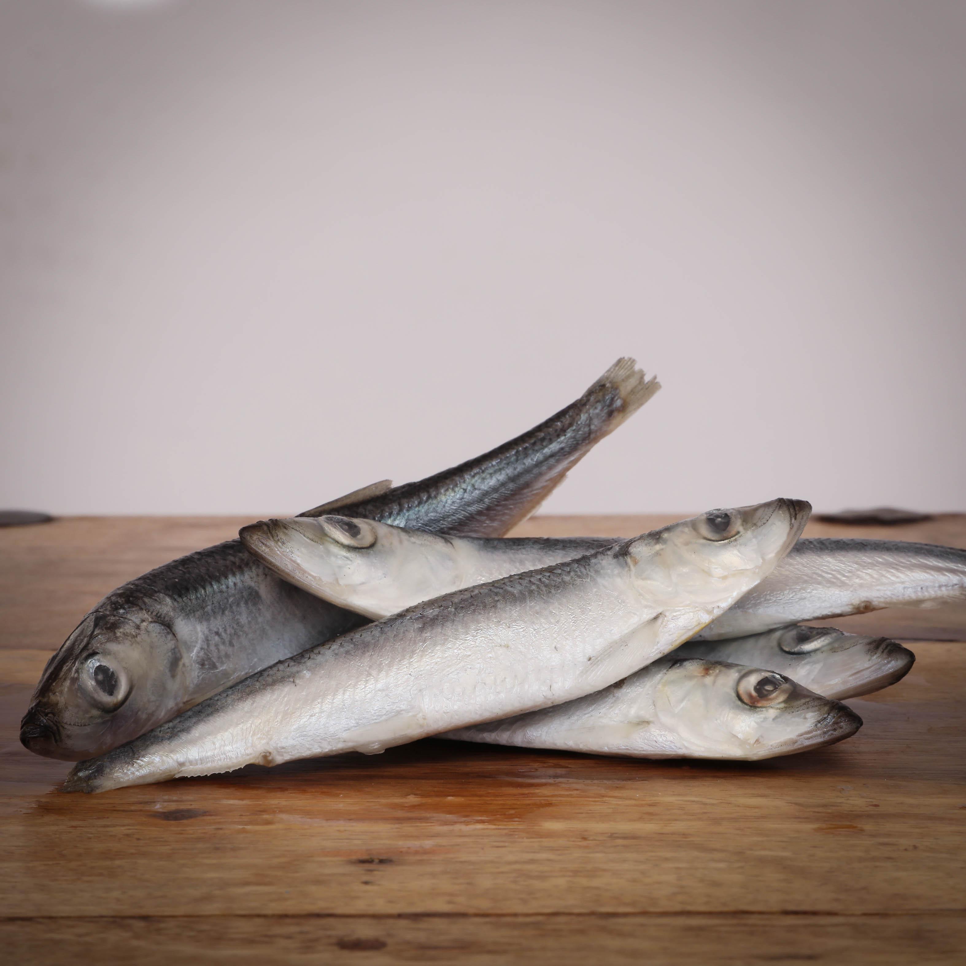 Heringe, ganze Fische 15-18cm, lose für Greifvögel