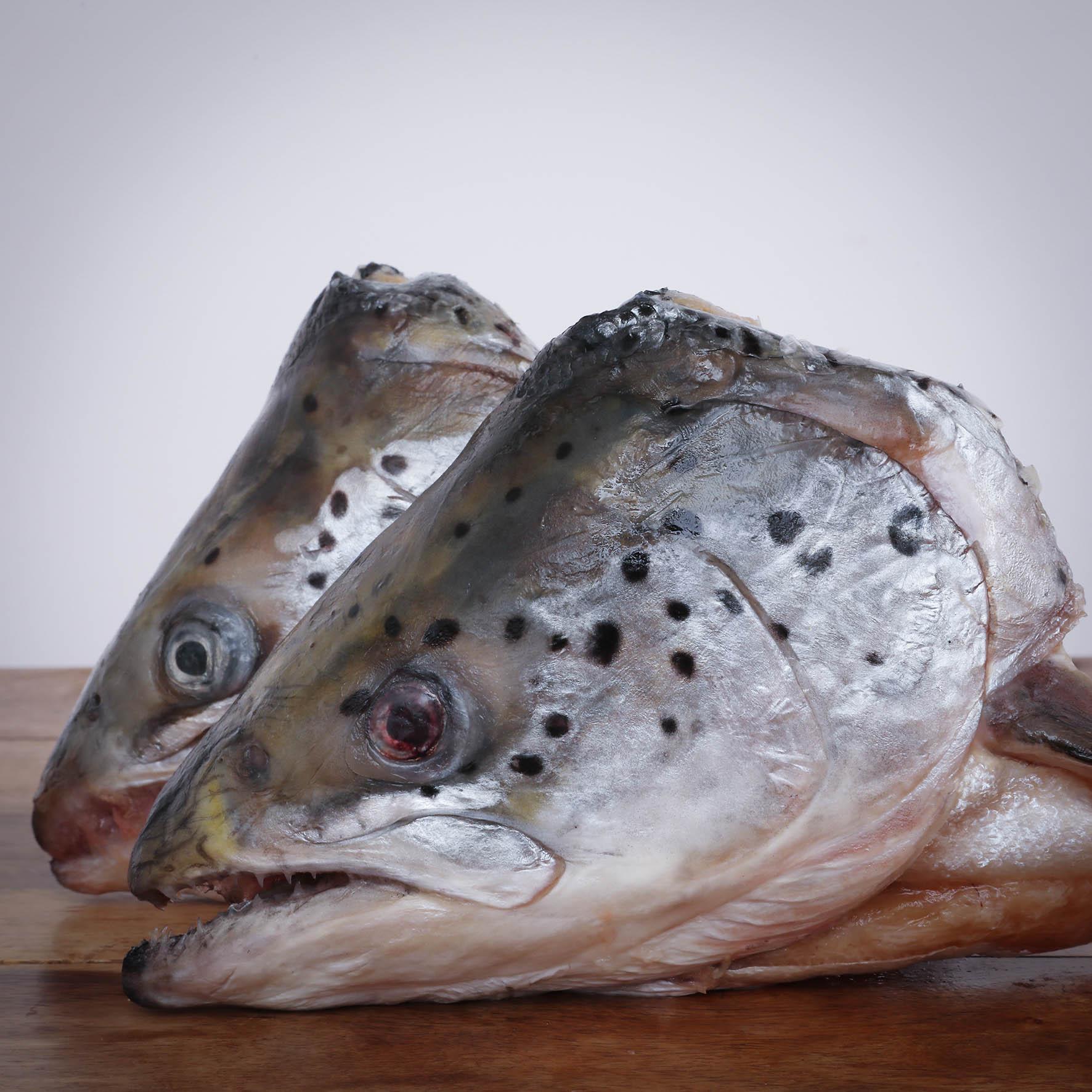 Lachsköpfe 2 Stück im Beutel für Greifvögel