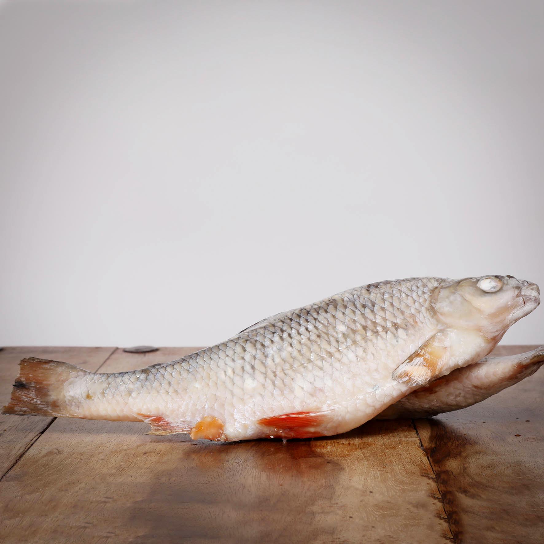 Rotaugen, ganze Fische, 500 g für Hunde