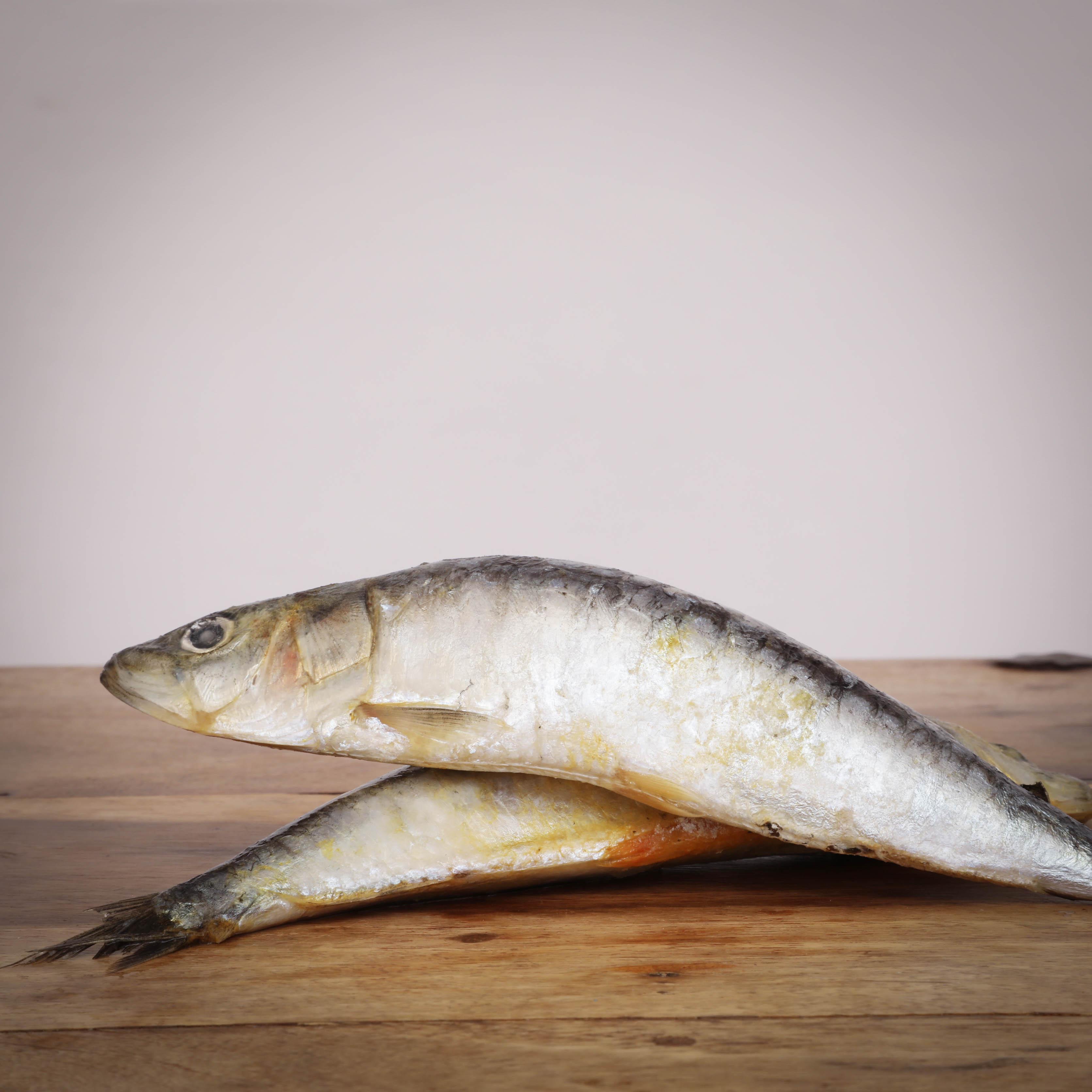 Sardinen, ganze Fische , lose, 500 g für Greifvögel